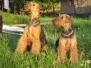 Unsere Zuchthunde