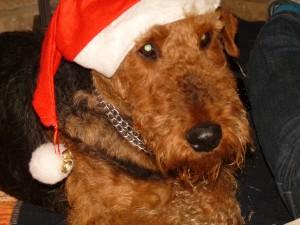 Hallo Frohe Weihnachten